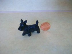 Black Scottie Terrier