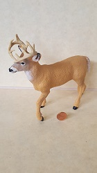 Whitetail Buck 1:12 scale
